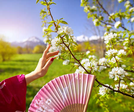 Woman in pink kimono touching flowers of blossom cherry by her hand. Spring season concept. Reklamní fotografie