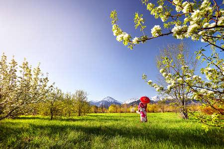雪に覆われた山を背景に白い桜の花と庭で赤い傘と着物姿の女性