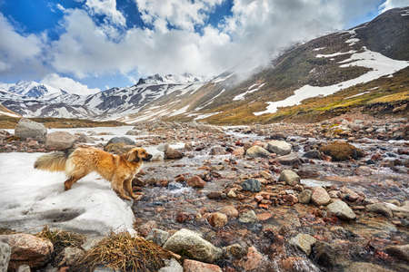 Brown Dog standing on snow near river in the mountain valley with cloudy sky background