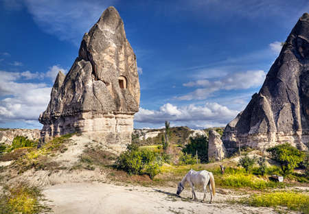 White horse near tufa geological formation with windows called fairy chimneys in Cappadocia, Turkey
