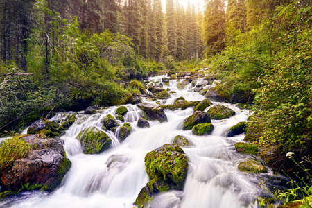 Beautiful view of high mountain river in the forest near lake Kolsai at sunrise in Kazakhstan, central Asia