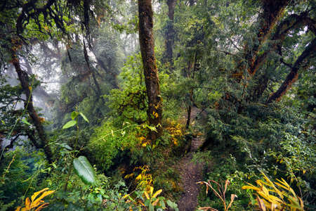 Beautiful landscape of high trees of Subtropical foggy forest of Annapurna trek in Nepal