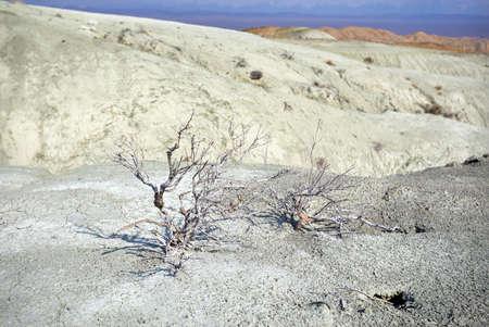 Dry plants of desert park Altyn Emel in Kazakhstan.