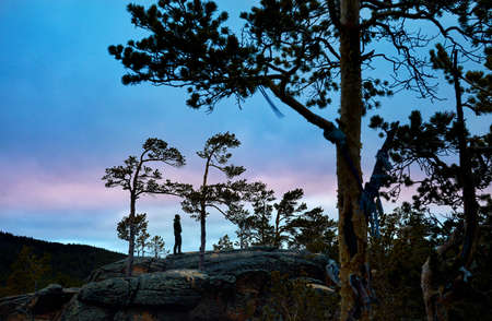 Man in silhouette between Pine trees of Karkaraly national park in Central Kazakhstan at purple sunset