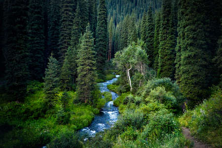 Beautiful view of river in the mountain juicy forest near Kolsai at twighlight in Kazakhstan Stock Photo