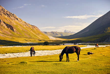 Horses in near the river in Terskey Alatau mountains of Kyrgyzstan, Central Asia