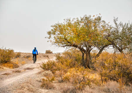 Man on mountain bike rides on the road near yellow tree at the desert
