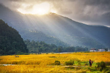 Silhouette of traditional farmer woman with bag at rice field in mountain valley in Himalayas, Nepal