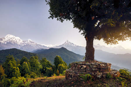 Big Tree at beautiful landscape of Himalaya Mountain Annapurna South and Hinchuli at Mardi Himal trek, Nepal Stock Photo