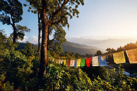 Rainforest and Tibetan prayer flags Lung Ta at the Mardi Himal trek at sunrise in Himalaya Mountains, Nepal