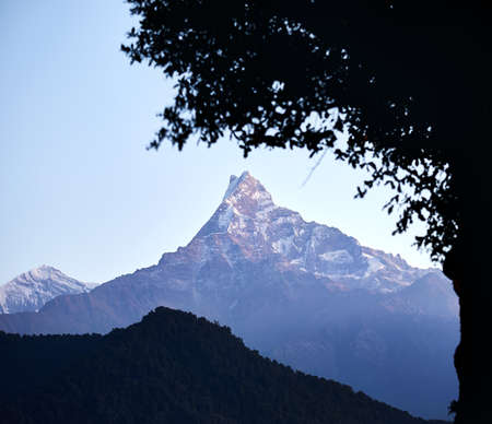 Himalaya Mountain Machapuchare of Fish Tale framing by tree silhouette at the sunrise in Nepal