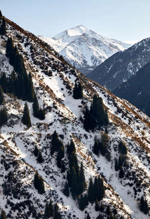 High mountains with snow and pine trees on peaks at winter time