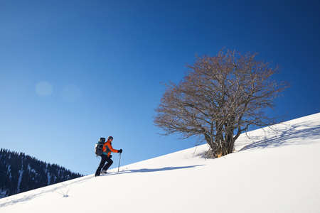 Man skiing on fresh powder snow near lonely tree against blue sky in the mountains