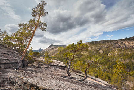 Beautiful pine trees in the forest at rocky mountains of Karkaraly national park in Central Kazakhstan Stock Photo