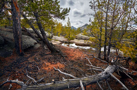 Beautiful pine wood of Karkaraly national park in Central Kazakhstan Stock Photo