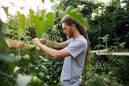 Bearded farmer with dreadlocks working in his greenhouse