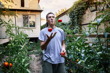 Young farmer is juggle with red ripe tomatoes at his backyard garden. Natural farming concept