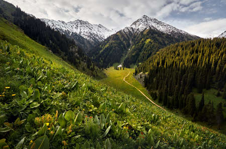 Meadow with flowers and green hills at mountain valley against cloudy sky in Kazakhstan