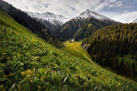 Prado con flores y colinas verdes en el valle de la montaña contra el cielo nublado en Kazajstán