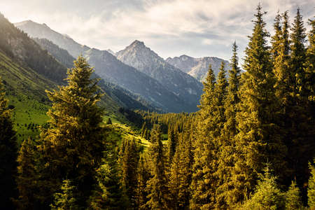 Landscape of mountain valley with spruce trees and snowy peak in Karakol national park, Kyrgyzstan