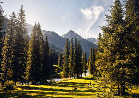 Landscape of river and mountain valley with spruce trees and snowy peak in Karakol national park, Kyrgyzstan