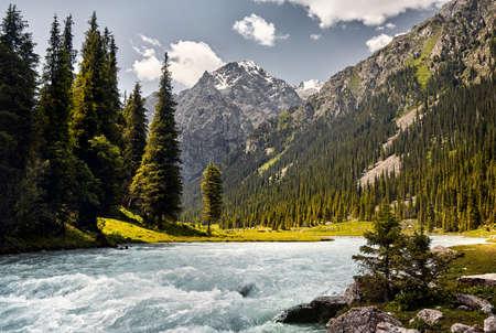 Karakol river in the mountain valley with big pine trees and snowy peak in Karakol national park, Kyrgyzstan