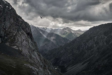 Silhouette of falcon in the grey mountain valley with river and overcast rainy clouds in Karakol national park, Kyrgyzstan