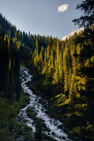 Wild River in the mountain valley at sunny day in Kazakhstan Stok Fotoğraf