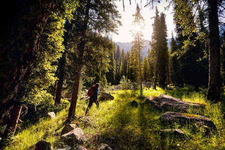 Tourist with backpack is walking in the spruce forest at sunrise, Almaty, Kazakhstan