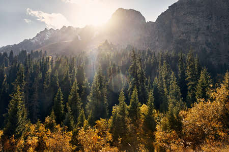 Beautiful landscape of mountain valley with autumn forest at sunset in Kazakhstan