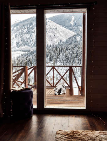 Cute dog is sleeping at wooden house in the mountain resort at winter