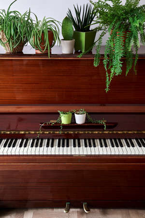 Old vintage piano with various green home plants in the pots in the room 免版税图像