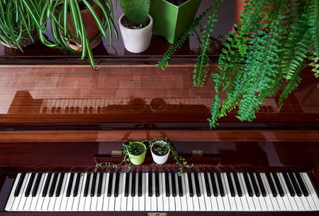 Old vintage piano with various green home plants in the pots top view in the room 免版税图像