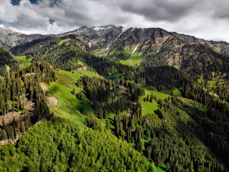 Aerial view of pine forest in beautiful mountains at sunny day. Photo taken with Drone