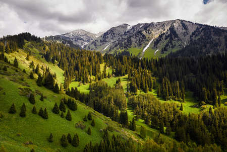 Beautiful Idyllic landscape of pine forest in the mountain valley at cloudy sunny day Reklamní fotografie