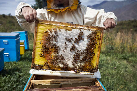 Beekeeper in protect costume is holding a hive frame at the apiary in the mountains