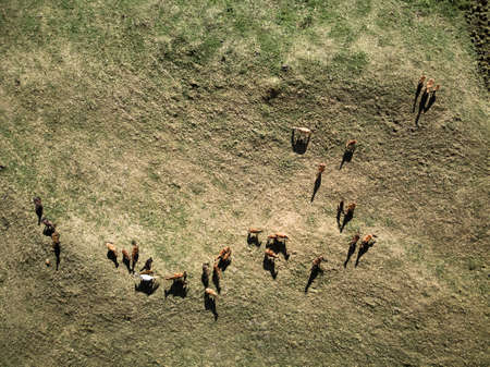 Top view aerial photo from drone of a meadow with horses at mountain valley in in Kazakhstan Zdjęcie Seryjne