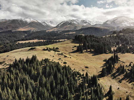 Aerial view of spruce forest in beautiful mountain valley with snowy hills in Kazakhstan