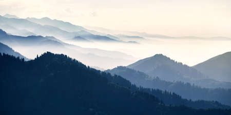 Beautiful panorama landscape of mountain forest with beautiful spruce trees at fog at cyan tone in Almaty, Kazakhstan
