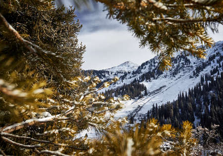 Beautiful scenery of the mountains summit with snow framed with spruce tree in Almaty, Kazakhstan. Outdoor and hiking concept