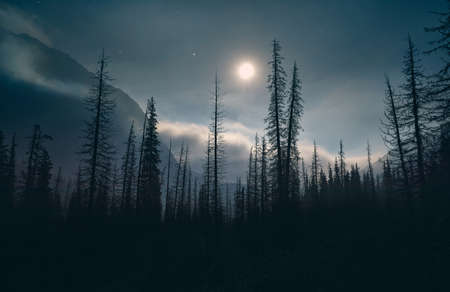Silhouette of spruce at night sky with full moon and stars in the mountains of Kazakhstan