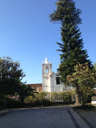 bell tower: bell tower and big tree