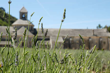 Lavender in front of the abbaye de Senanque in Provence, France photo