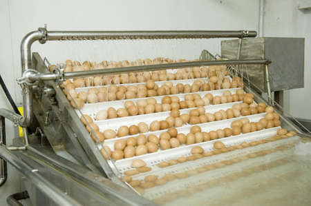 Eggs moving on the production line