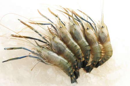Raw shrimp on ice background 스톡 콘텐츠
