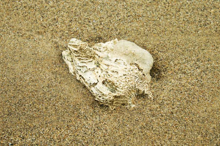 Dead coral on the beach photo