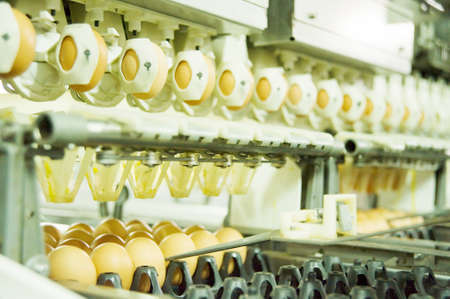 Eggs on the production line Stock Photo