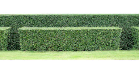 Green hedge in garden Stock Photo