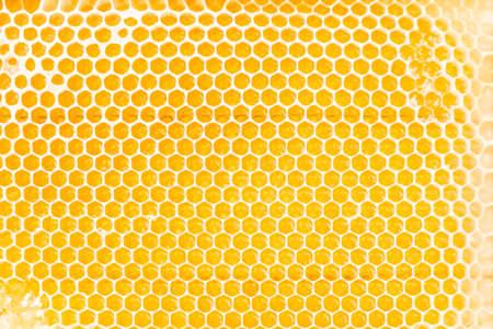 Honey Bee (Apis mellifera) nest in Japan Stock Photo