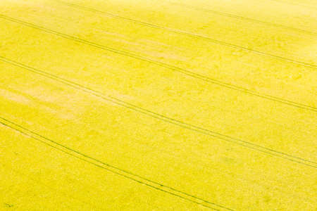 cropland: Aerial photograph area on agriculture and village
